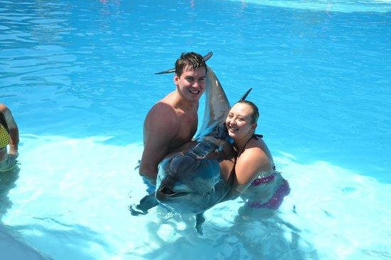 Schwimmen mit Delfinen ab Sharm el Sheikh