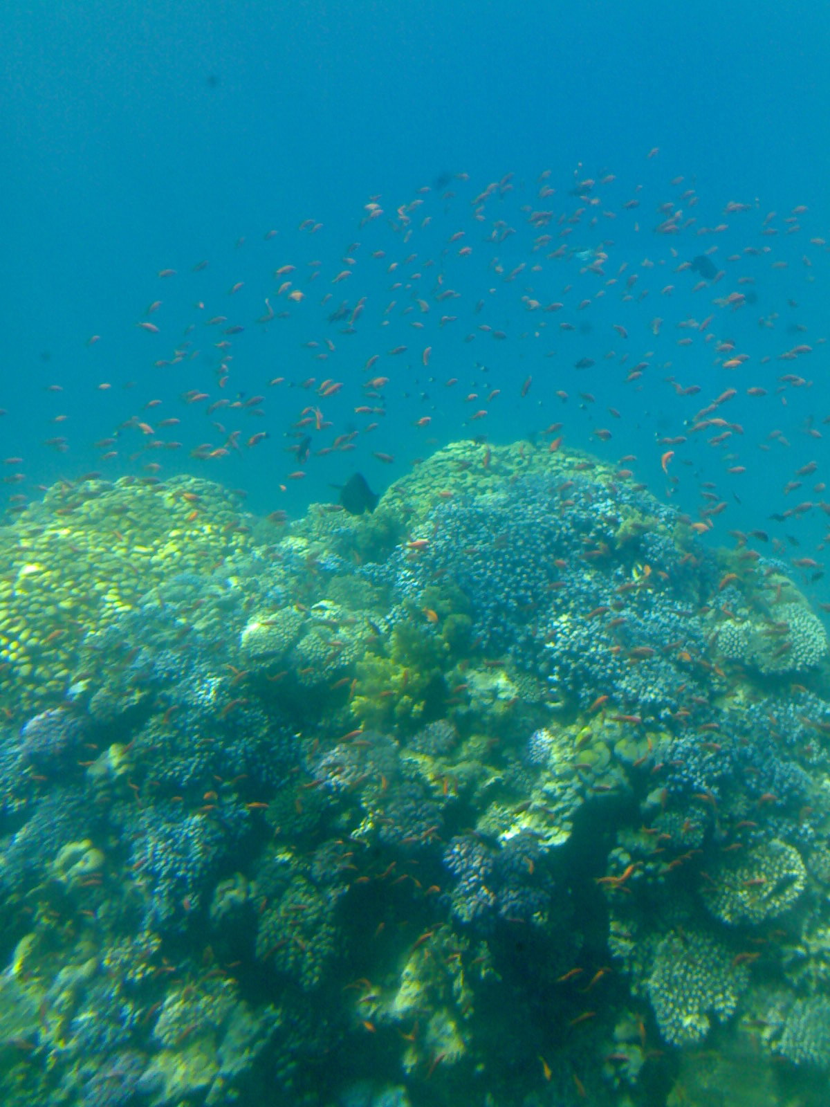 Schnuppertauchen und Schnorcheln ab Makadi Bay