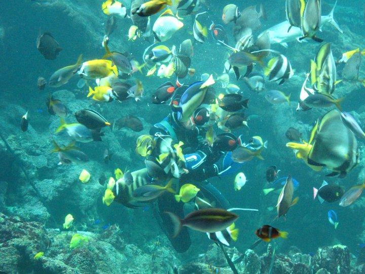 PADI Open Water Diver - Tauchkurs