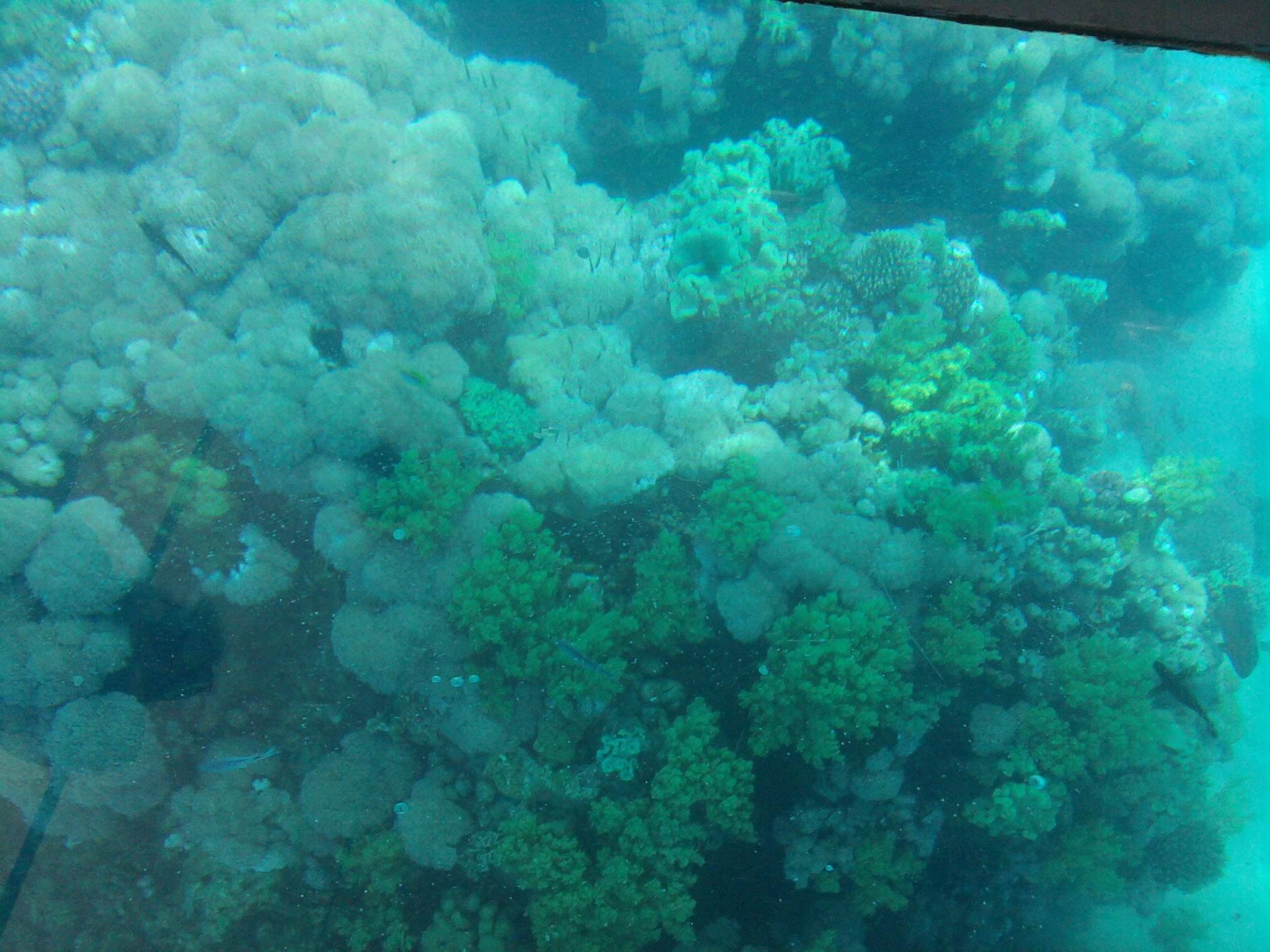 Sindbad U-Boot - Tauchausflug ab Makadi Bay/Sahl Hasheesh