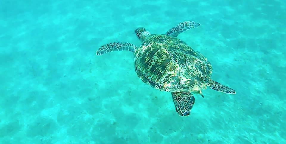 Ausflug zu den Schildkröten von Abu Dabbab