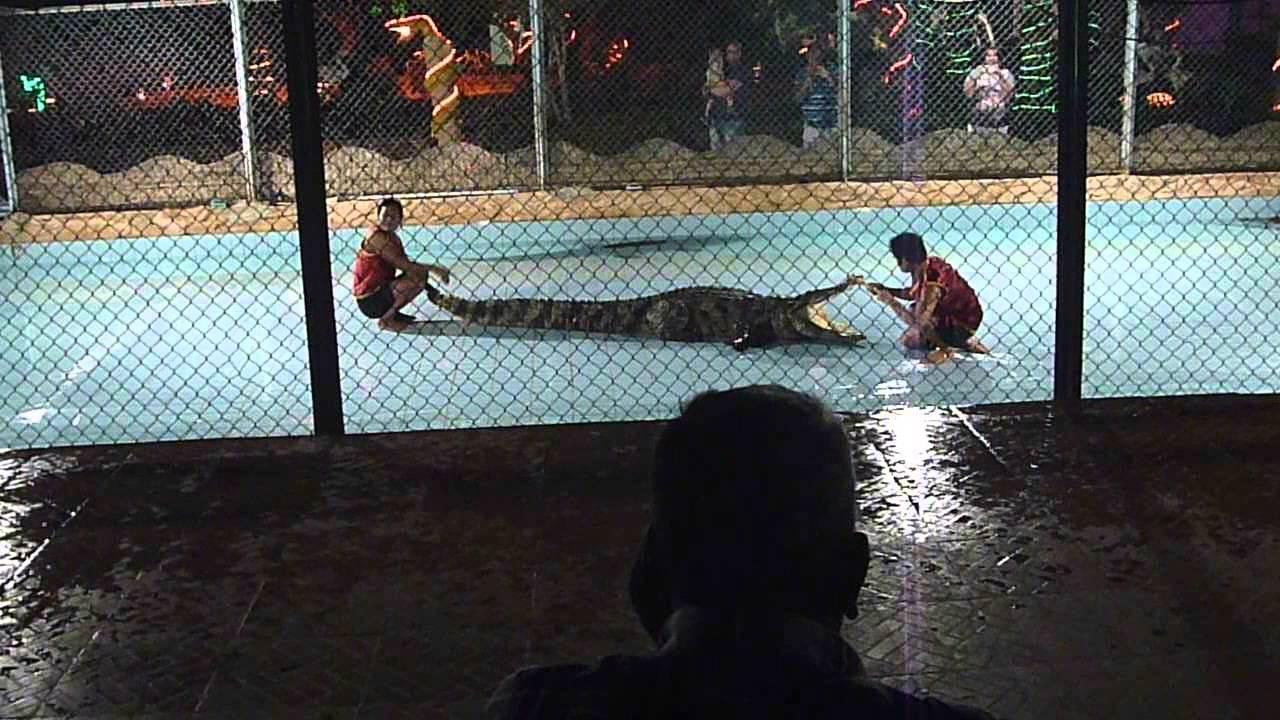 Schlangen- und Krokodilshow
