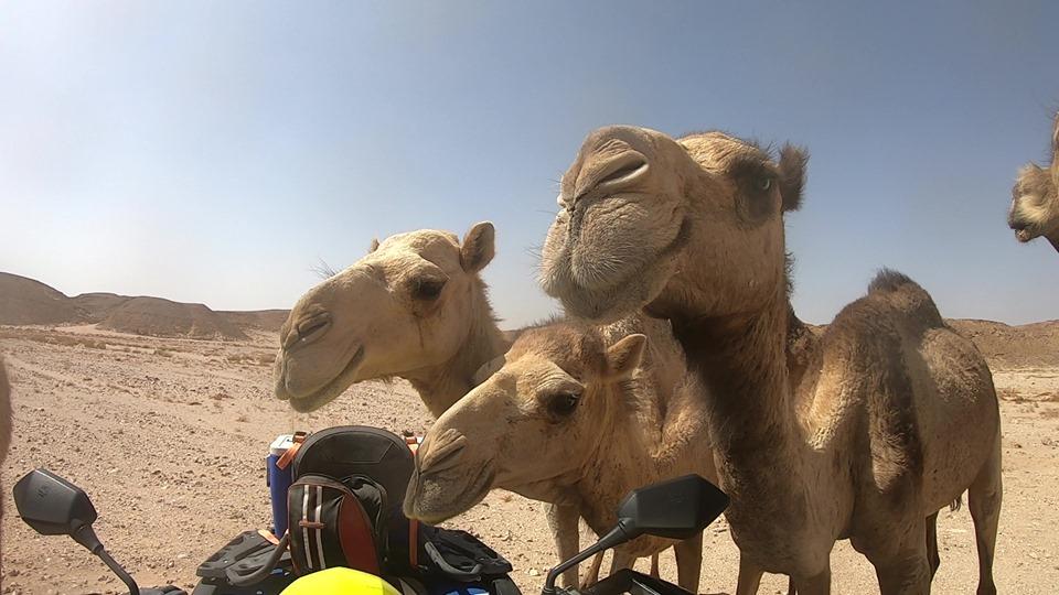 Quad Fahren, Kamelreiten und Sterne beobachten in Sharm el Sheikh